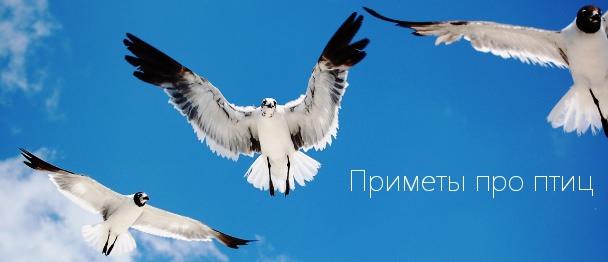 Народные приметы о птицах - Приметы и знамения