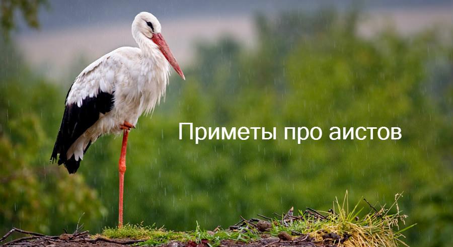 Народные приметы и суеверия про птицу аиста